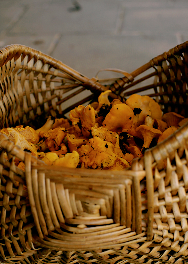 Chanterelle-risotto-basket